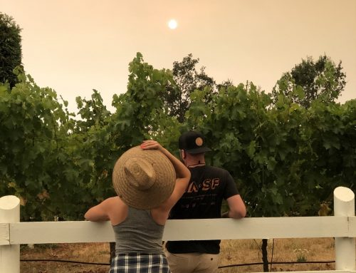 Bowman Journal Fall 2020: Fire Season in Sonoma County